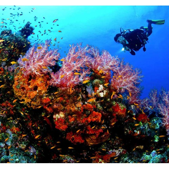 PADI AWARE - Coral Reef Conservation Diver